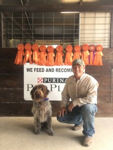 Wirehaired Pointing Griffon Stud Dog JJ 1